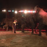 SONNY FRANKELLO - GERMANY - AFRIKAN ELEPHANTS (NOT COMPETING ACT)