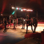 SONNY FRANKELLO - GERMANY - FRISIAN HORSES (NOT COMPETING ACT)